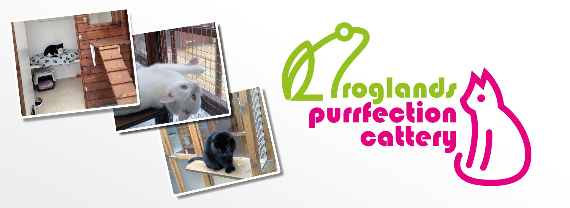 Caterham Cattery